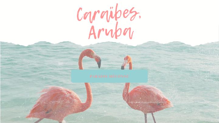 Que faire à Aruba, l'île aux flamants rose?
