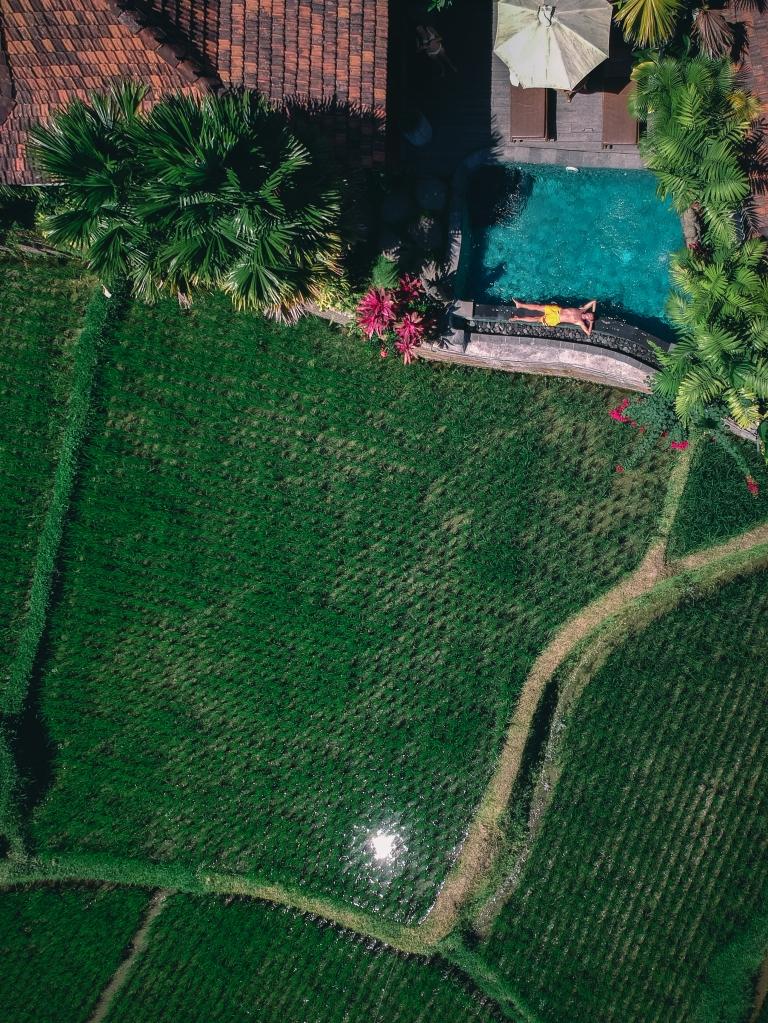 Vue sur les rizières avec le drone
